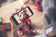 Woman taking cell phone picture of Sphynx cat wearing pullover - RTBF01063