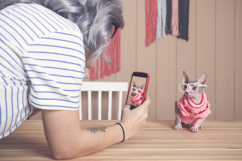 Woman taking cell phone picture of Sphynx cat wearing pullover and funny glasses - RTBF01075