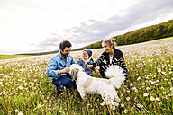 Cute little boy with parents and dog in dandelion field - HAPF02319