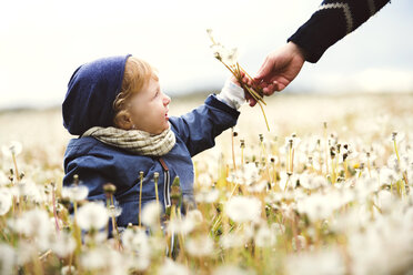 Cute little boy with mother on meadow full of dandelions - HAPF02328