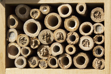 Insect hotel - CSF28378