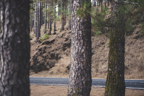Spain, Tenerife, Corona Forestal Nature Park, empty road - SIPF01816