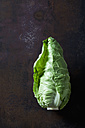 Sweetheart cabbage on dark background - CSF28401