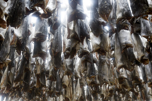Norway, Lofoten, Hamnoy, dead fishes hanging up - RPSF00056