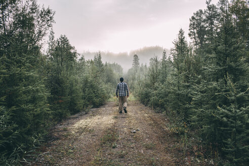 Man walking on path in forest - VPIF00244