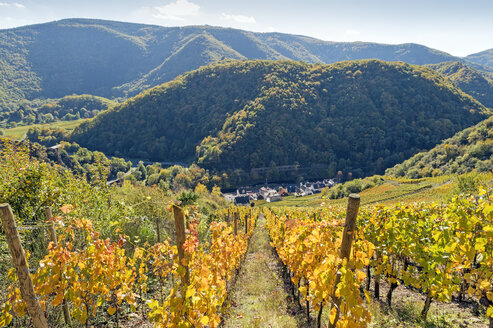 Germany, Rhineland-Palatinate, Ahr Valley, Reimerzhoven at Ahr river, vineyards - FRF00595