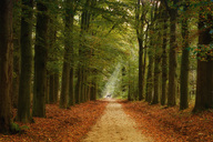 Germany, forest track and deer in autumn - KLRF00538