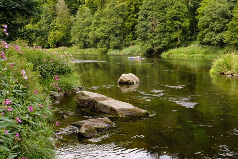 Germany, Bavaria, Upper Palatinate, Bavarian Forest, near Regenstauf, River Regen, himalayan balsam and foldboat - SIEF07576