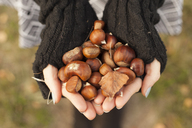 Woman's hands holding chestnuts, close-up - FCF01296