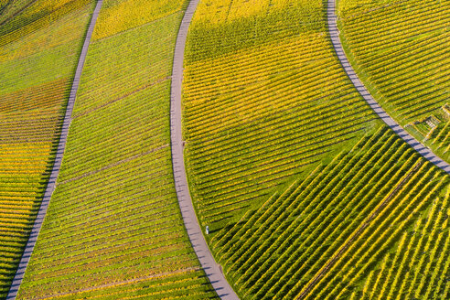 Germany, Stuttgart, aerial view of vineyards at Kappelberg in autumn - STSF01363