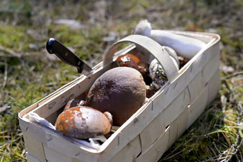 Splint basket of collected mushrooms - BFRF01809