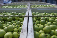 Green apples in crates on truck - ZEF14673
