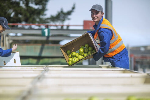 Worker in reflective vest packing apples - ZEF14679