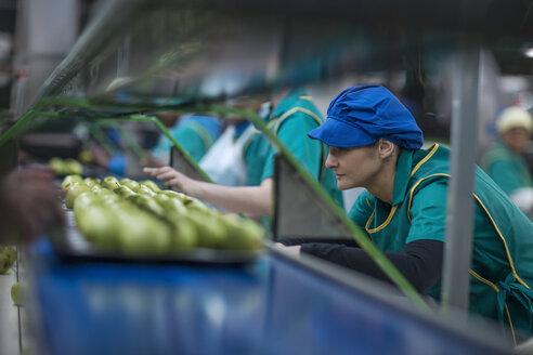 Women working in apple factory - ZEF14709