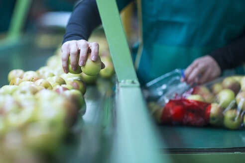 Close-up of woman packing apples in plastic bags in factory - ZEF14712