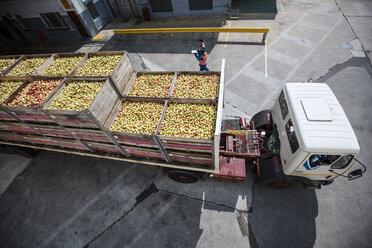 Truck transporting apples - ZEF14715