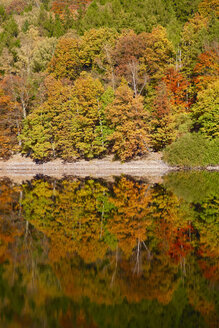 Germany, autumn forest, water reflection - JTF00854