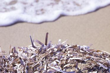 Dead Neptune grass on the beach - CMF00743