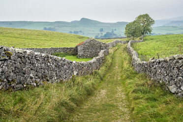 Great Britain, England, District Yorkshire Dales, field path at Catrigg Force - STSF01393