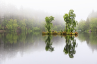 Great Britain, Scotland, Scottish Highlands, Glencoe, Glencoe Lochan, morning fog - FOF09481