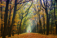 Jogger in autumnal forest - KLR00543