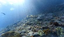 Indonesia, Bali, Nusa Lembongan, coral reef and different reef fishes, Lyretail Anthias, Pseudanthias squamipinnis, shoal of fish, light beams - ZC00570