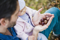 Father searching for chestnuts in park, with baby daughter on his lap - DIGF03187