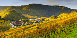 Germany, Rhineland-Palatinate, Eifel, Ahr Valley, Mayschoss, Vineyard in autumn - WGF01129