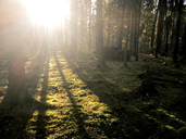 Forest in backlight in autumn - LVF06423