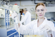 Scientist working in lab pipetting - WESTF23705