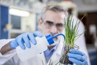 Scientist in lab watering plant - WESTF23714