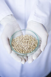 Scientist in lab holding grain sample in petri dish - WESTF23768