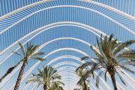 Spain, Valencia, Ciudad de las Artes y de Las Ciencias, L'Umbracle, palm garden - JPF00288