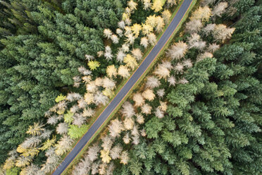 Great Britain, Scotland, pine forest and road - MJOF01447