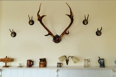 Antlers collection on a wall - PPXF00134