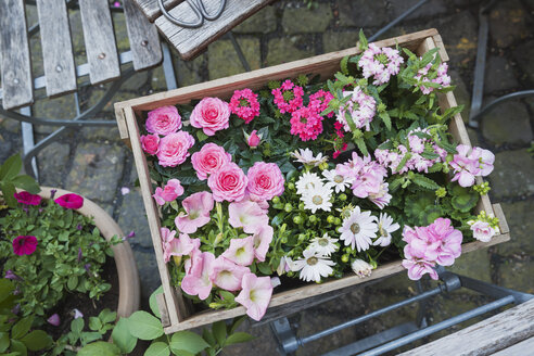 Gardening, planting of summer flowers, wooden box - GWF05330