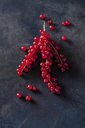 Red currants on dark metal - CSF28556