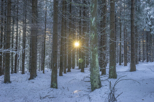 Germany, Saxony-Anhalt, Harz National Park, winter forest in the evening - PVCF01181