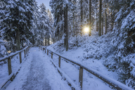 Germany, Lower Saxony, Harz National Park, hiking path in the morning - PVCF01199