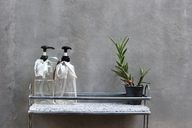 Home decor with cactus plant dispensers in bath - IGGF00226