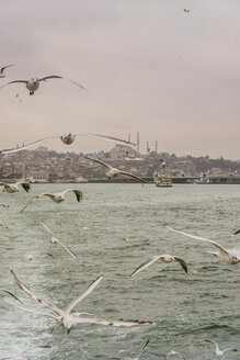 Turkey, Istanbul, Cityview with Suleymaniye Mosque, seagulls in foreground - CHPF00457