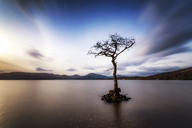 Great Britain, Scotland, Loch Lomond, Milarrochy Bay, Lone tree - SMAF00898
