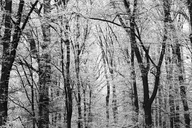 Germany, winter forest - JTF00864