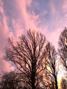 Eevening sky and trees in winter - JTF00867