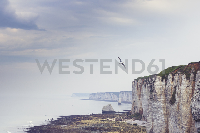 France, Upper Normandy, near Etretat, Alabaster coast and flying bird - DWIF00894 - Dirk Wüstenhagen/Westend61