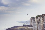 France, Upper Normandy, near Etretat, Alabaster coast and flying bird - DWIF00894