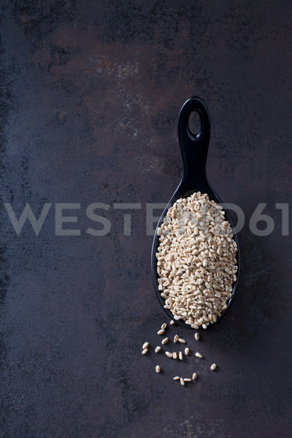 Spoon of of spelt grains on rusty metal - CSF28627