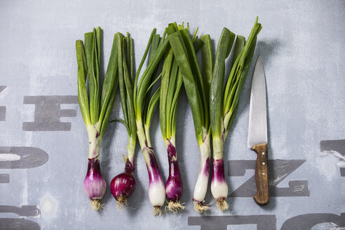 Rw of spring onions and kitchen knife - MAEF12463