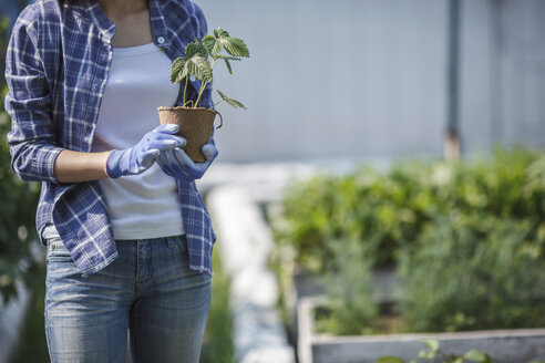 Young woman planting strawberry plant in garden - VPIF00272