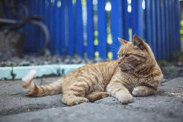 Russia, ginger cat lying - VPIF00281
